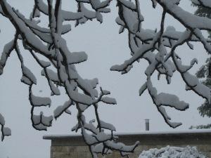שלג 20 003