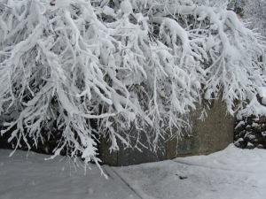 שלג 20 007